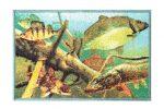Szőnyeg Delphin AQUA